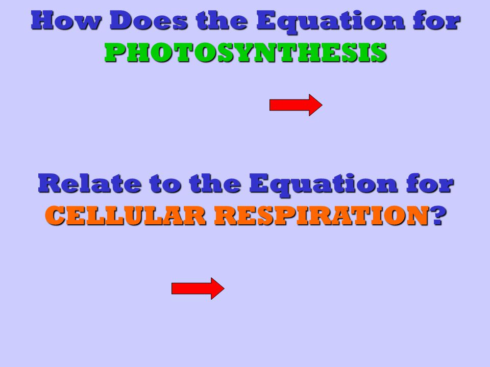 How Does the Equation for PHOTOSYNTHESIS Relate to the Equation for CELLULAR RESPIRATION