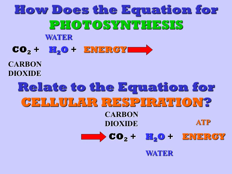 How Does the Equation for PHOTOSYNTHESIS CO 2 + H2O +H2O +H2O +H2O +ENERGY CARBON DIOXIDE WATER Relate to the Equation for CELLULAR RESPIRATION.