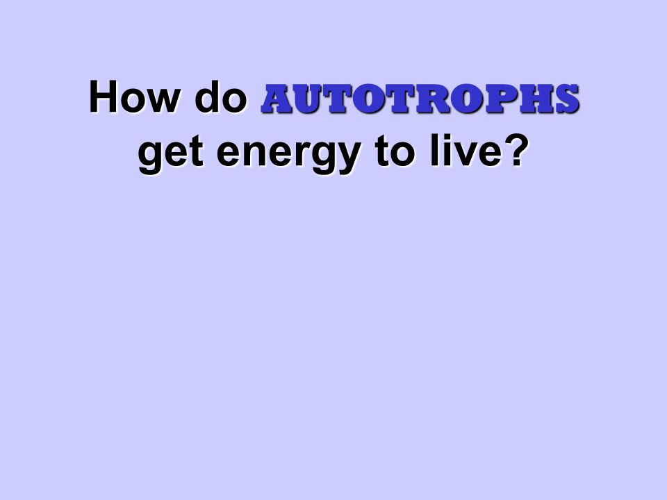 AUTOTROPHS Use energy from the sun to make their own food by doing photosynthesis