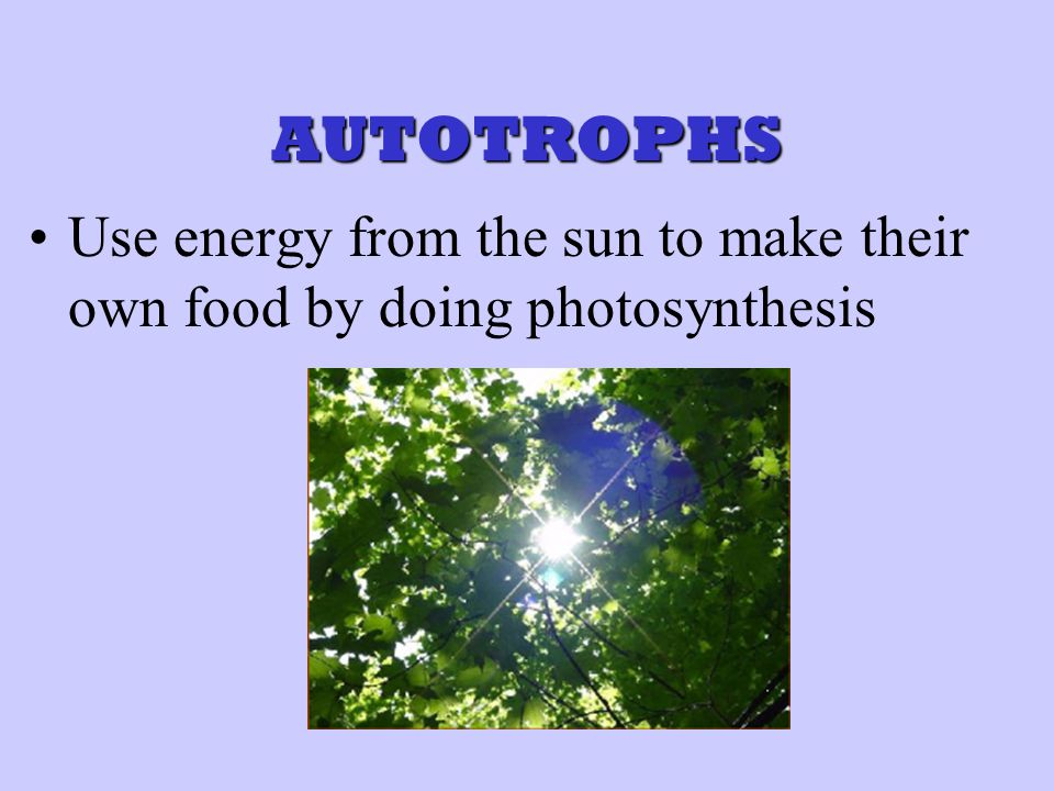 How Does the Equation for PHOTOSYNTHESIS Relate to the Equation for CELLULAR RESPIRATION.