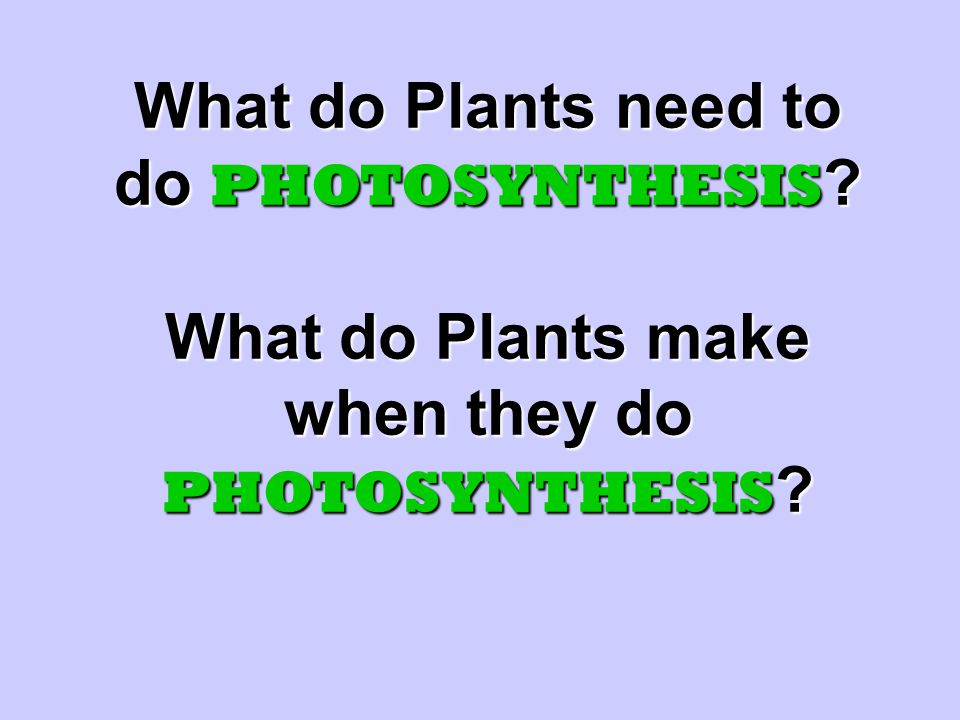 What do Plants need to do PHOTOSYNTHESIS What do Plants make when they do PHOTOSYNTHESIS