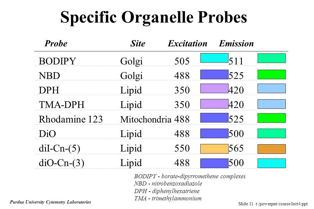 Slide 11 t:/powerpnt/course/lect4.ppt Purdue University Cytometry Laboratories Specific Organelle Probes BODIPY Golgi505511 NBD Golgi488525 DPH Lipid350420 TMA-DPH Lipid350420 Rhodamine 123 Mitochondria 488525 DiOLipid488500 diI-Cn-(5)Lipid550565 diO-Cn-(3)Lipid488500 Probe Site Excitation Emission BODIPY - borate-dipyrromethene complexes NBD - nitrobenzoxadiazole DPH - diphenylhexatriene TMA - trimethylammonium