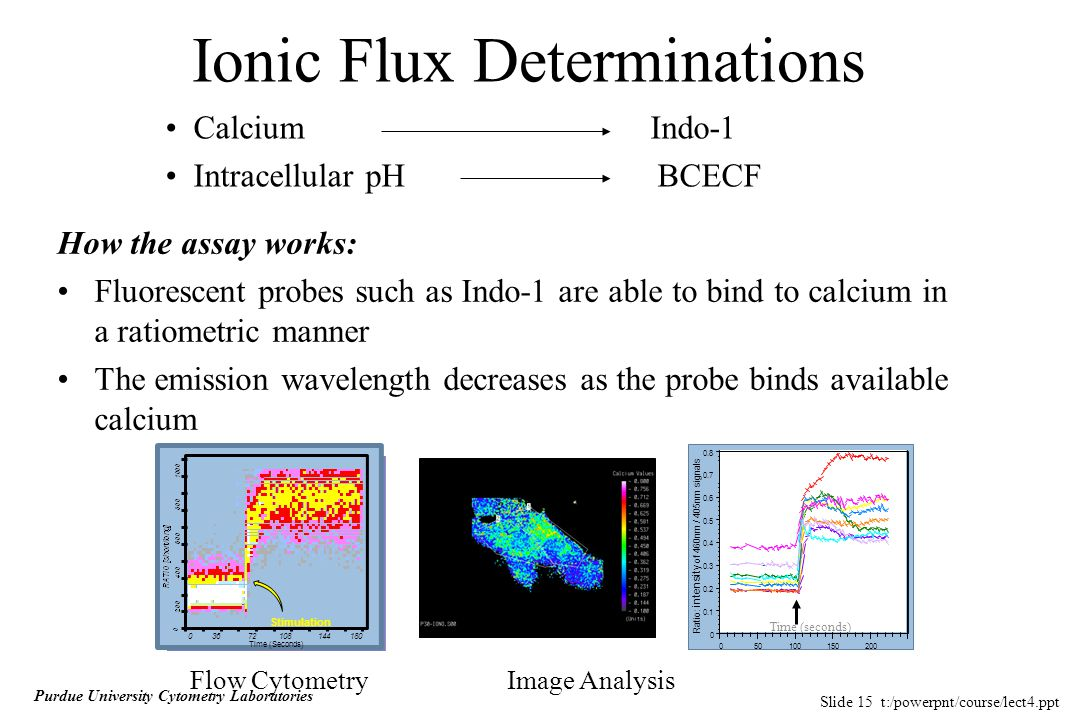 Slide 15 t:/powerpnt/course/lect4.ppt Purdue University Cytometry Laboratories Ionic Flux Determinations CalciumIndo-1 Intracellular pH BCECF How the assay works: Fluorescent probes such as Indo-1 are able to bind to calcium in a ratiometric manner The emission wavelength decreases as the probe binds available calcium Time (Seconds) 03672108144180 Stimulation 0 0.1 0.2 0.3 0.4 0.5 0.6 0.7 0.8 050100150200 Ratio: intensity of 460nm / 405nm signals Time (seconds) Flow CytometryImage Analysis
