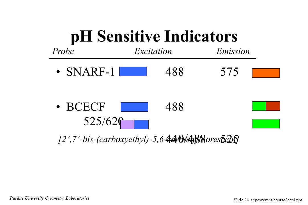 Slide 24 t:/powerpnt/course/lect4.ppt Purdue University Cytometry Laboratories pH Sensitive Indicators SNARF-1488575 BCECF488 525/620 440/488525 [2',7'-bis-(carboxyethyl)-5,6-carboxyfluorescein] ProbeExcitationEmission