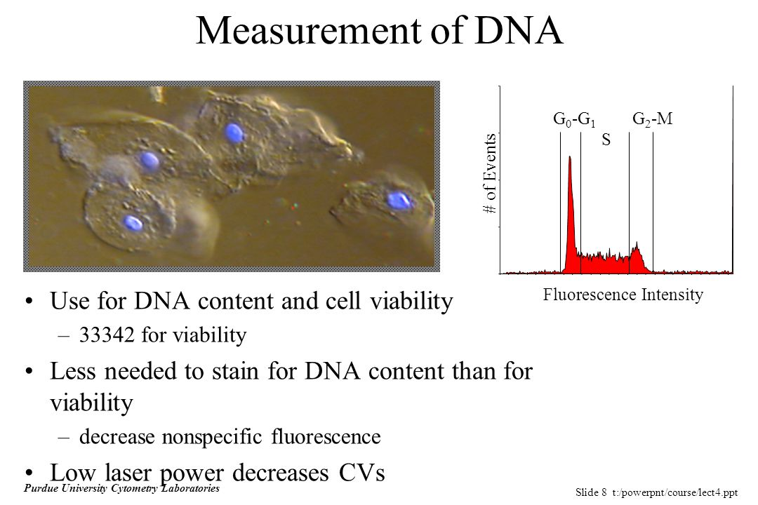 Slide 8 t:/powerpnt/course/lect4.ppt Purdue University Cytometry Laboratories Use for DNA content and cell viability –33342 for viability Less needed to stain for DNA content than for viability –decrease nonspecific fluorescence Low laser power decreases CVs Measurement of DNA G 0 -G 1 S G 2 -M Fluorescence Intensity # of Events