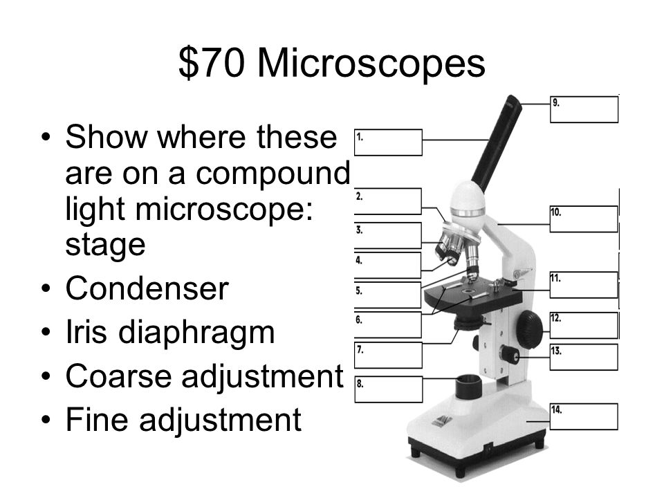 $70 Microscopes Show where these are on a compound light microscope: stage Condenser Iris diaphragm Coarse adjustment Fine adjustment