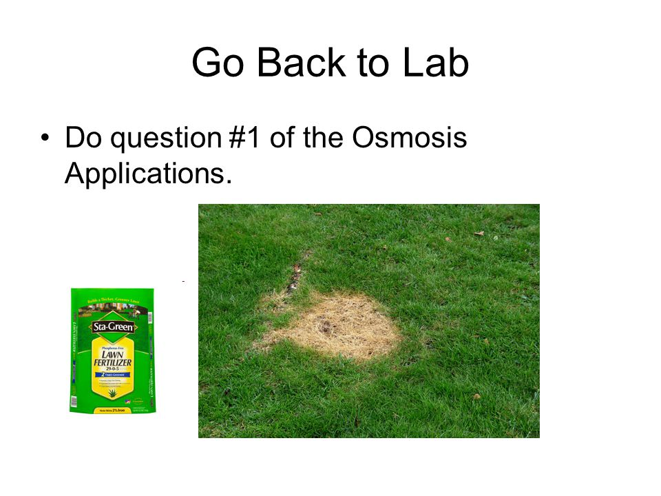 Go Back to Lab Do question #1 of the Osmosis Applications.