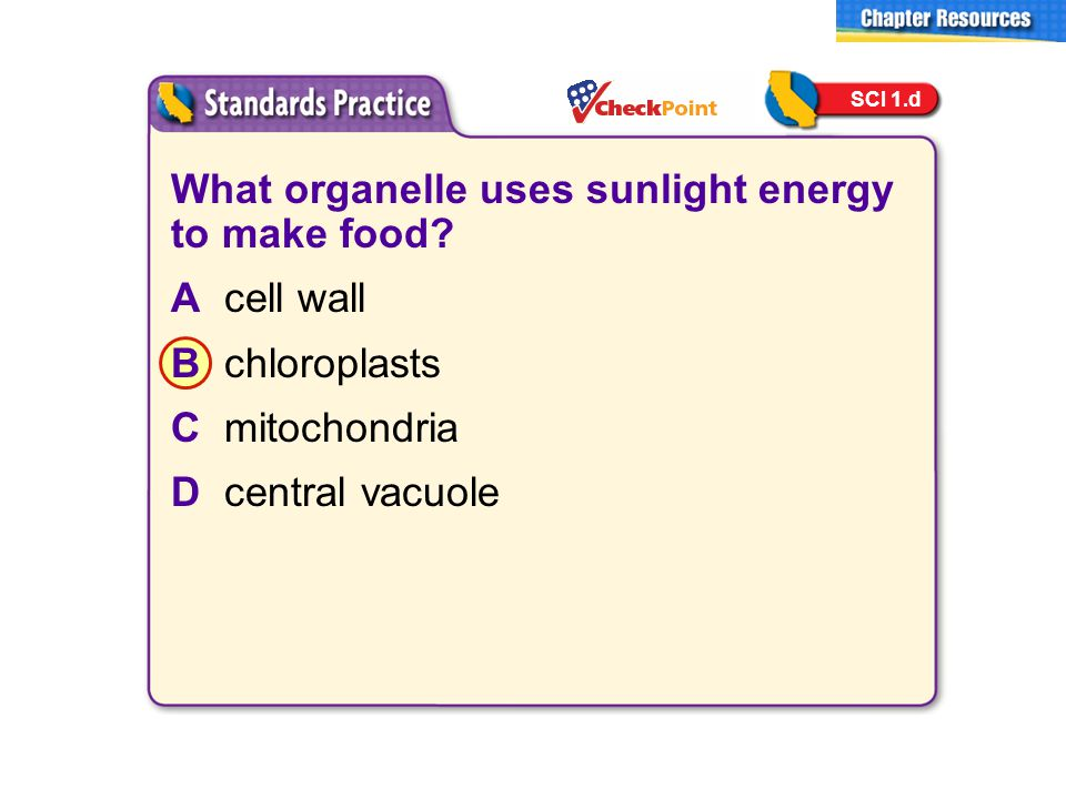 What organelle uses sunlight energy to make food? Acell wall Bchloroplasts Cmitochondria Dcentral vacuole SCI 1.d