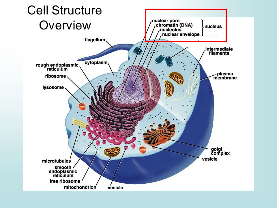 Cell Structure Overview