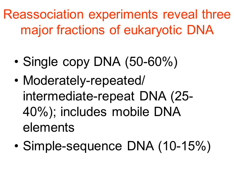Reassociation experiments reveal three major fractions of eukaryotic DNA Single copy DNA (50-60%) Moderately-repeated/ intermediate-repeat DNA (25- 40%); includes mobile DNA elements Simple-sequence DNA (10-15%)
