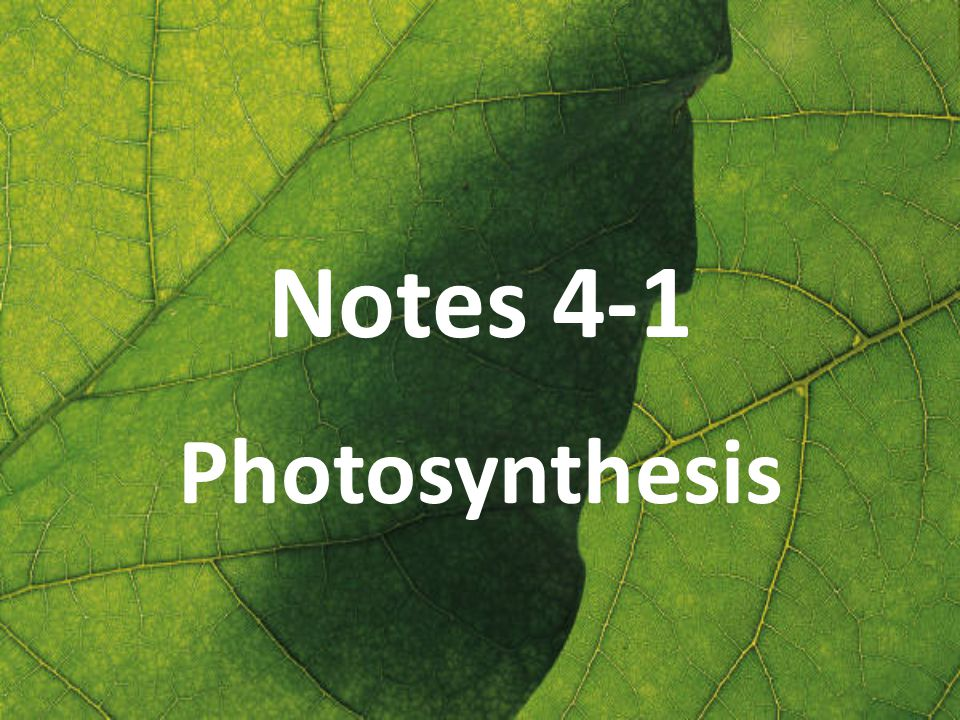Notes 4-1 Photosynthesis