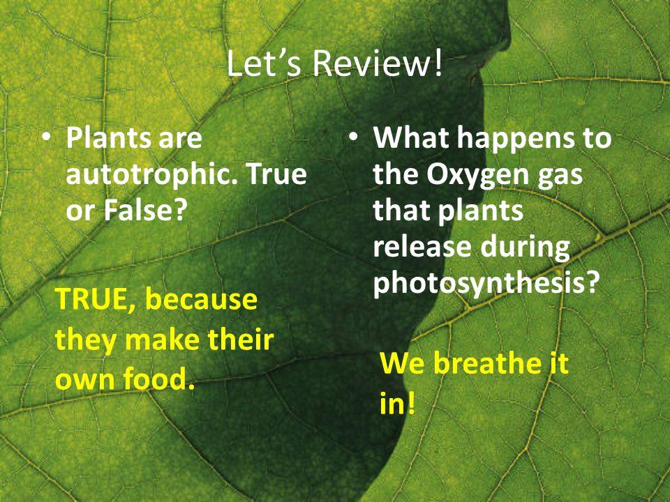 Let's Review. Plants are autotrophic. True or False.