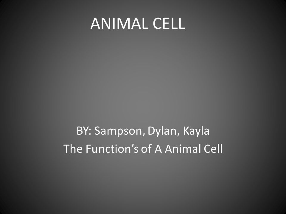 ANIMAL CELL BY: Sampson, Dylan, Kayla The Function's of A Animal Cell