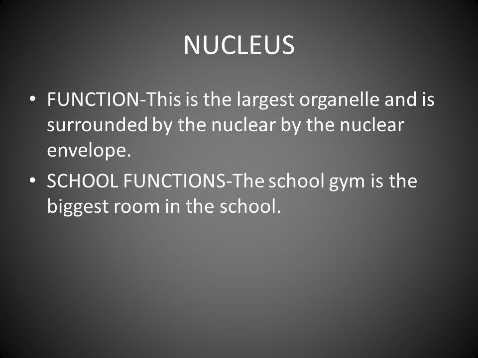 NUCLEOLUS FUNCTION-The nucleolus is small dense body within the nucleolus.