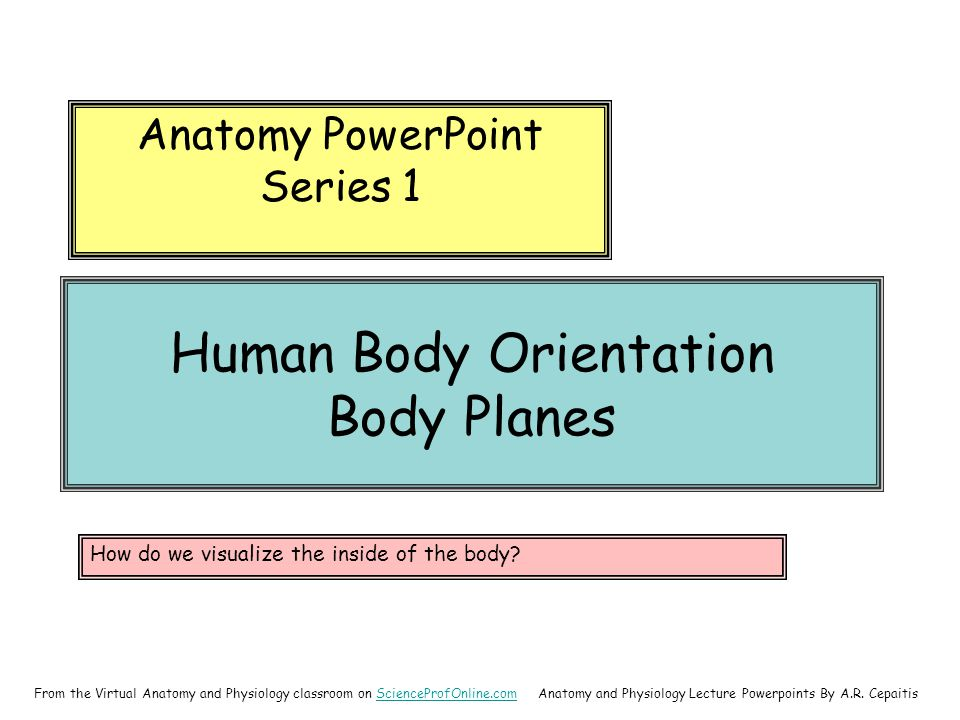 Human Body Orientation Body Planes Anatomy PowerPoint Series 1 Anatomy and Physiology Lecture Powerpoints By A.R.