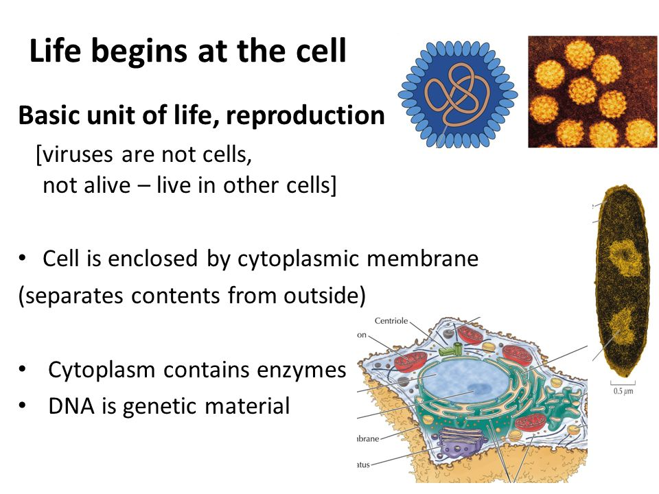 Life begins at the cell Basic unit of life, reproduction [viruses are not cells, not alive – live in other cells] Cell is enclosed by cytoplasmic membrane (separates contents from outside) Cytoplasm contains enzymes DNA is genetic material