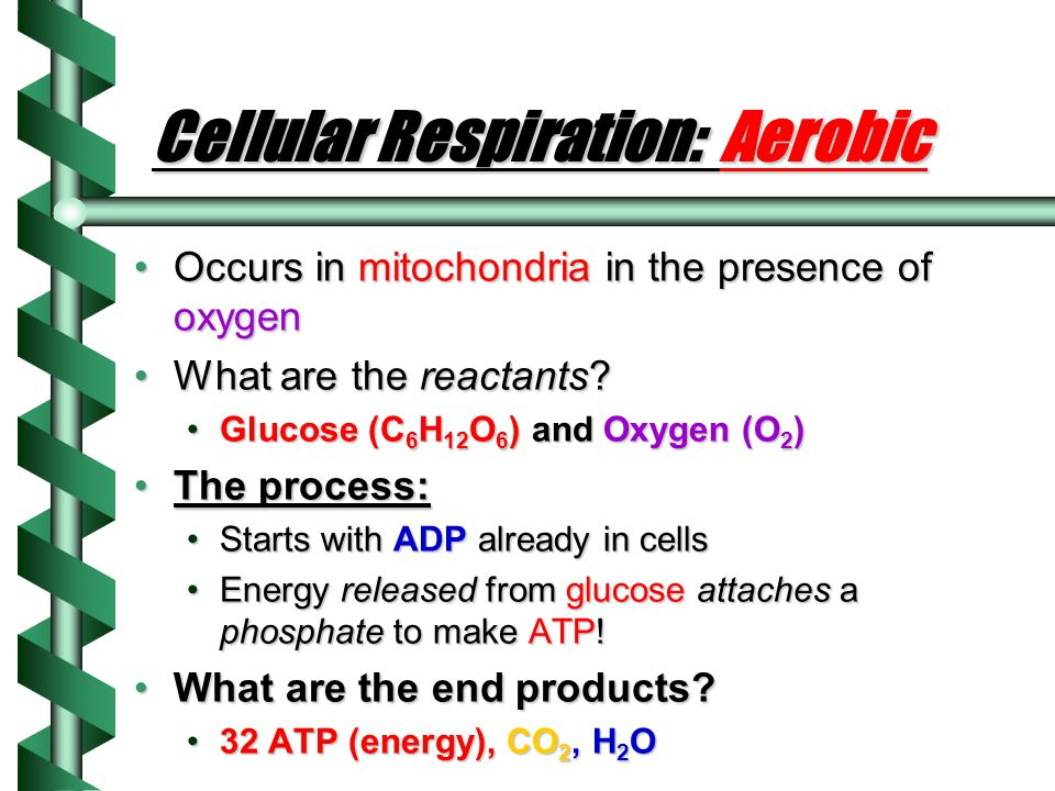 Cellular Respiration: The basics Breaking down glucose to make ATPBreaking down glucose to make ATP Occurs in autotrophs AND heterotrophs (all living things need to make ATP!)Occurs in autotrophs AND heterotrophs (all living things need to make ATP!) In which organelle?In which organelle.