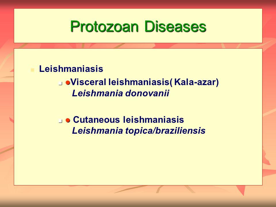 Leishmaniasis ● ● Visceral leishmaniasis( Kala-azar) Leishmania donovanii ● ● Cutaneous leishmaniasis Leishmania topica/braziliensis
