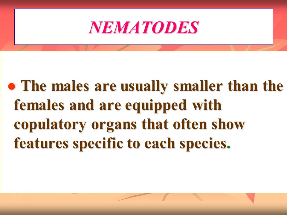 NEMATODES ● The males are usually smaller than the females and are equipped with copulatory organs that often show features specific to each species.