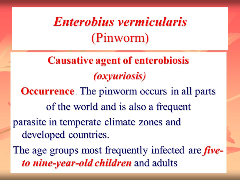 Enterobius vermicularis (Pinworm) Causative agent of enterobiosis (oxyuriosis) (oxyuriosis) Occurrence. The pinworm occurs in all parts of the world a
