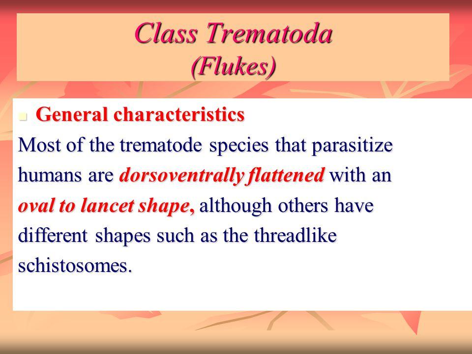 Class Trematoda (Flukes) General characteristics General characteristics Most of the trematode species that parasitize humans are dorsoventrally flatt