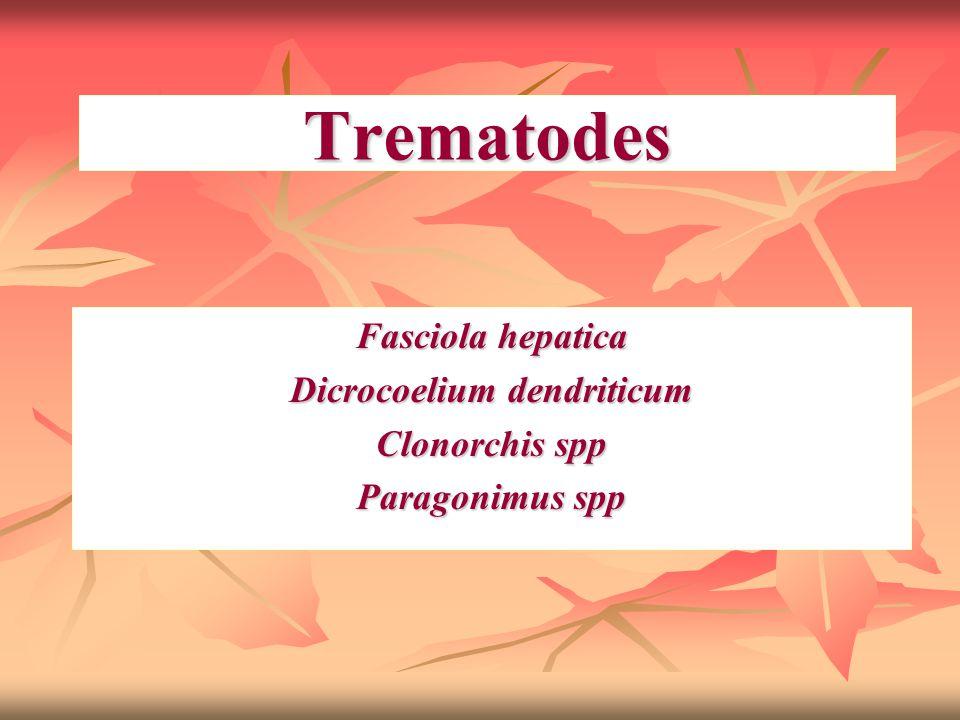 Trematodes Fasciola hepatica Dicrocoelium dendriticum Clonorchis spp Paragonimus spp