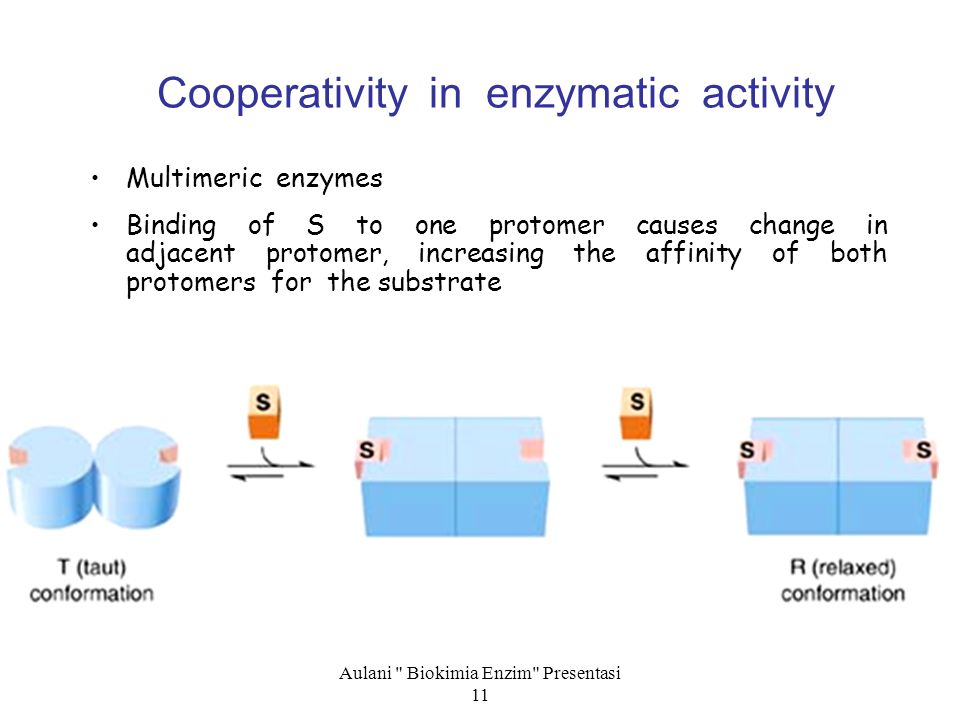 Aulani Biokimia Enzim Presentasi 11 Cooperativity in enzymatic activity Multimeric enzymes Binding of S to one protomer causes change in adjacent protomer, increasing the affinity of both protomers for the substrate