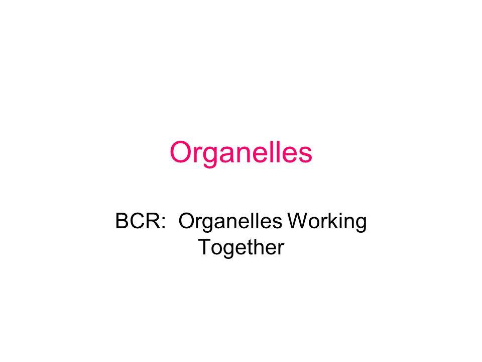 Organelles BCR: Organelles Working Together