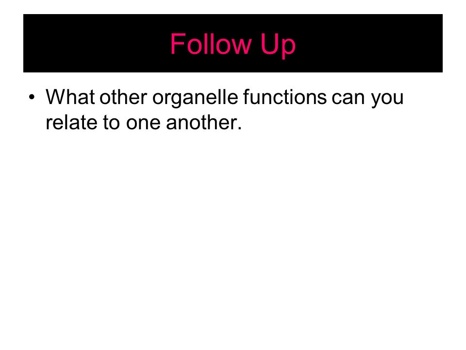 Follow Up What other organelle functions can you relate to one another.