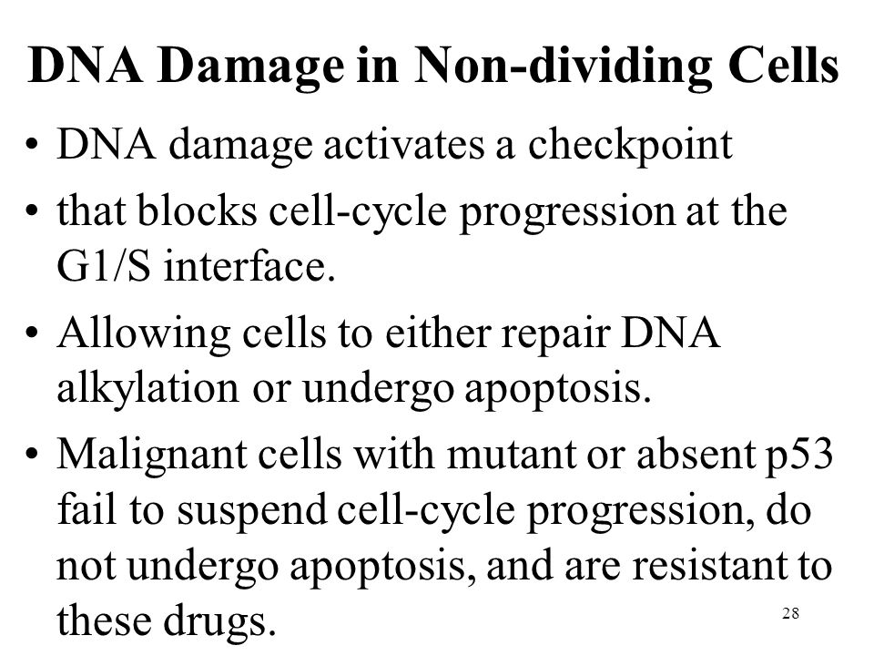 DNA Damage in Non-dividing Cells DNA damage activates a checkpoint that blocks cell-cycle progression at the G1/S interface.