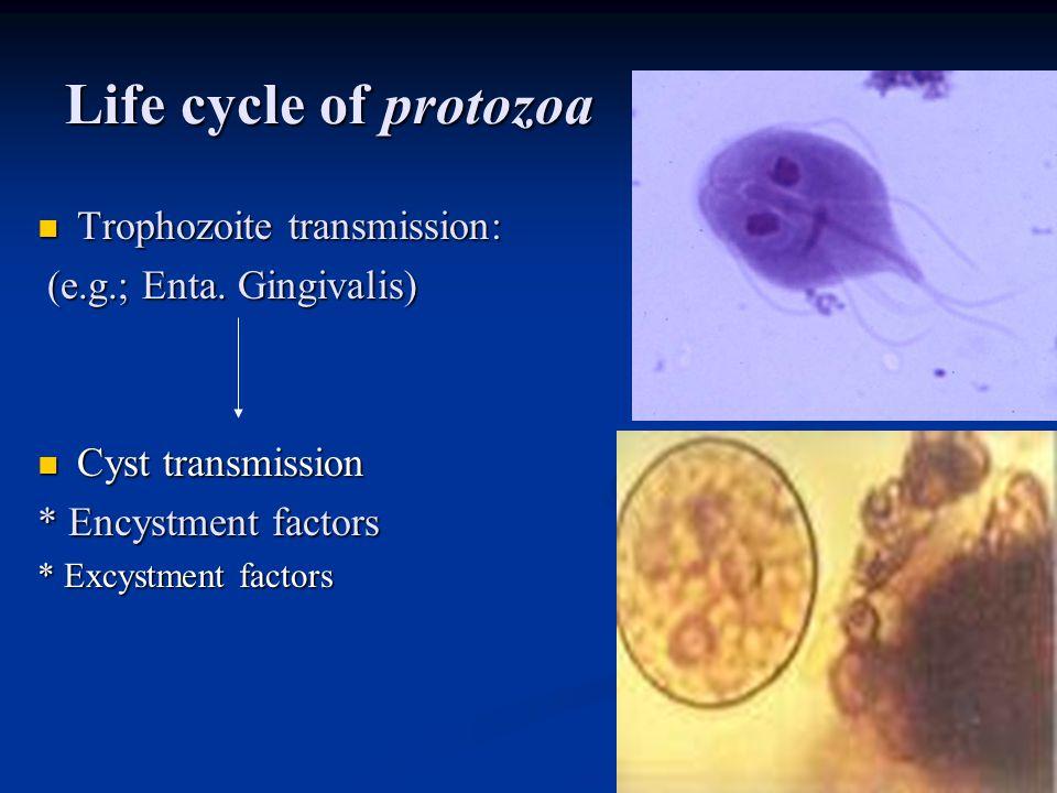 Life cycle of protozoa Trophozoite transmission: Trophozoite transmission: (e.g.; Enta. Gingivalis) (e.g.; Enta. Gingivalis) Cyst transmission Cyst tr