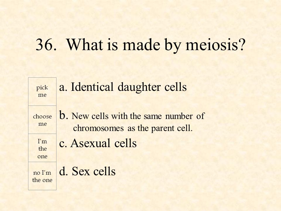 a. Identical daughter cells b. New cells with the same number of chromosomes as the parent cell.