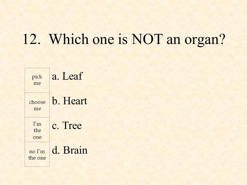 a. Leaf b. Heart c. Tree d. Brain pick me choose me I'm the one no I'm the one 12.