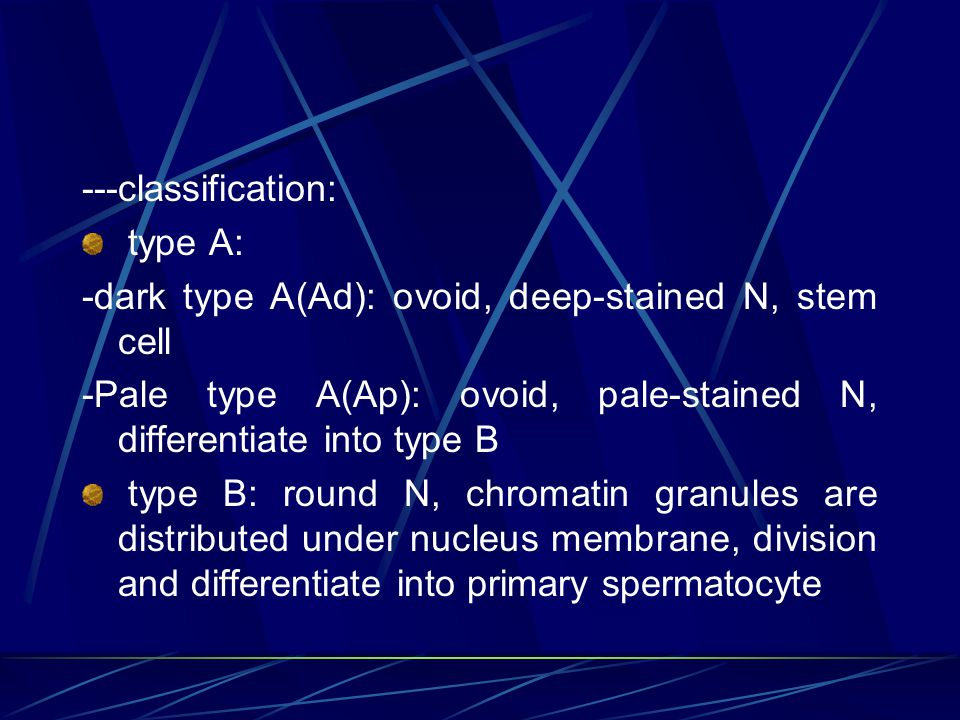 3) interstitial tissue: ---LCT ---Leydig cell: structure: LM: -in groups -large, polygonal-shaped cell, with round N -acidophilic cytoplasm EM: steroid-hormone secreting cell ' feature function: secrete testosterone- androgen