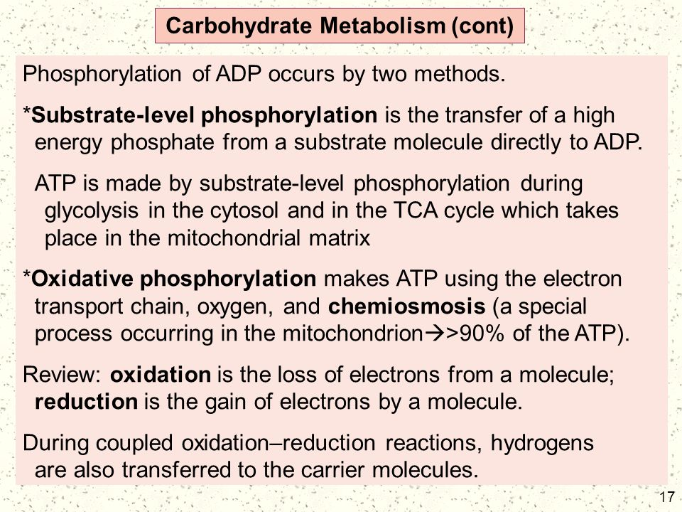 17 Carbohydrate Metabolism (cont) Phosphorylation of ADP occurs by two methods. *Substrate-level phosphorylation is the transfer of a high energy phos