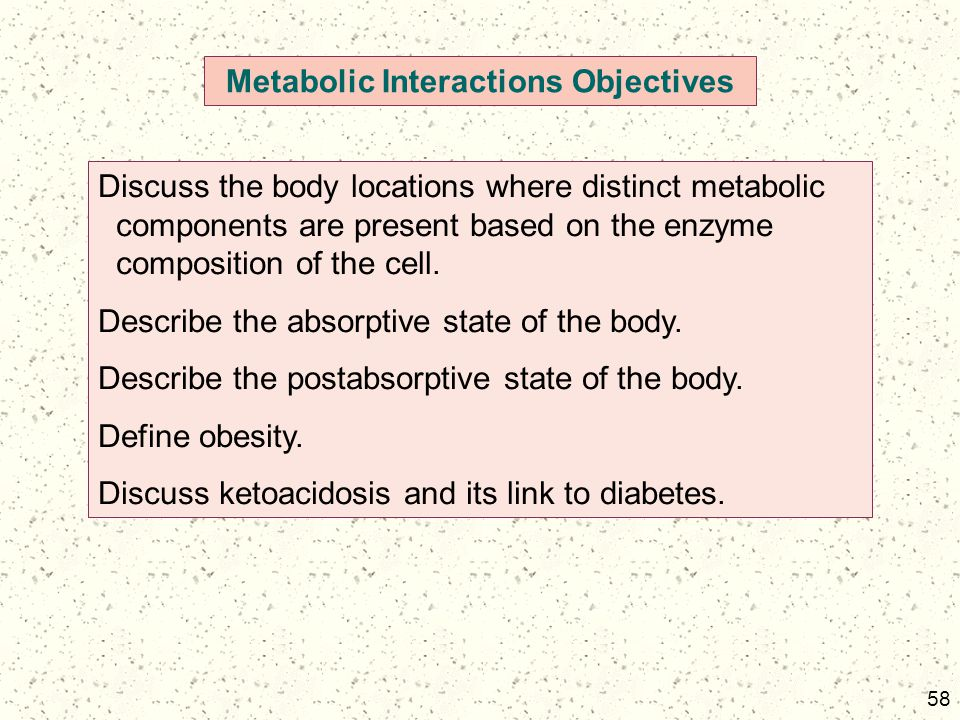 58 Metabolic Interactions Objectives Discuss the body locations where distinct metabolic components are present based on the enzyme composition of the