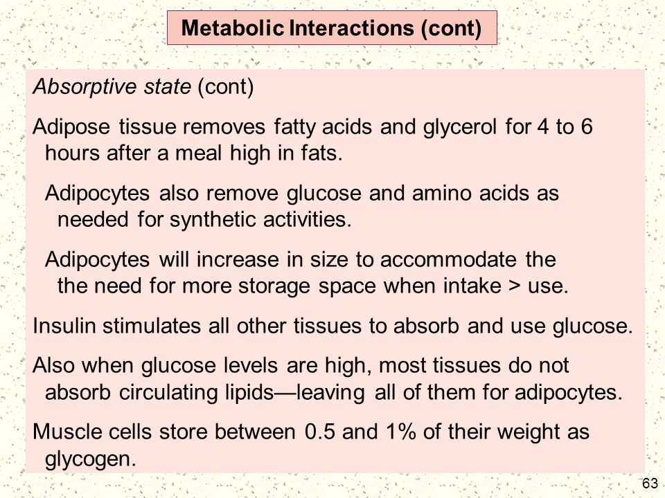 63 Metabolic Interactions (cont) Absorptive state (cont) Adipose tissue removes fatty acids and glycerol for 4 to 6 hours after a meal high in fats. A