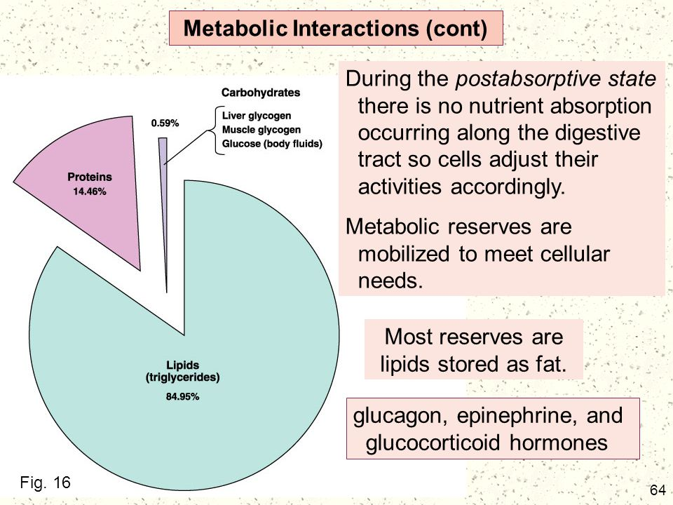 64 Metabolic Interactions (cont) During the postabsorptive state there is no nutrient absorption occurring along the digestive tract so cells adjust t