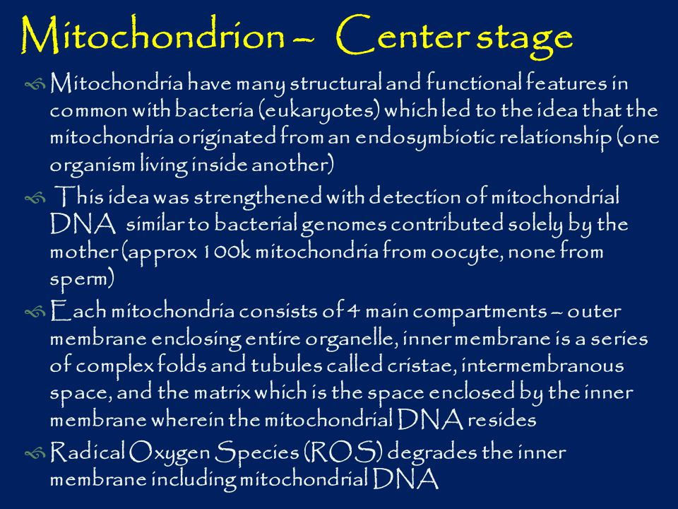Mitochondrion – Center stage  Mitochondria have many structural and functional features in common with bacteria (eukaryotes) which led to the idea that the mitochondria originated from an endosymbiotic relationship (one organism living inside another)  This idea was strengthened with detection of mitochondrial DNA similar to bacterial genomes contributed solely by the mother (approx 100k mitochondria from oocyte, none from sperm)  Each mitochondria consists of 4 main compartments – outer membrane enclosing entire organelle, inner membrane is a series of complex folds and tubules called cristae, intermembranous space, and the matrix which is the space enclosed by the inner membrane wherein the mitochondrial DNA resides  Radical Oxygen Species (ROS) degrades the inner membrane including mitochondrial DNA