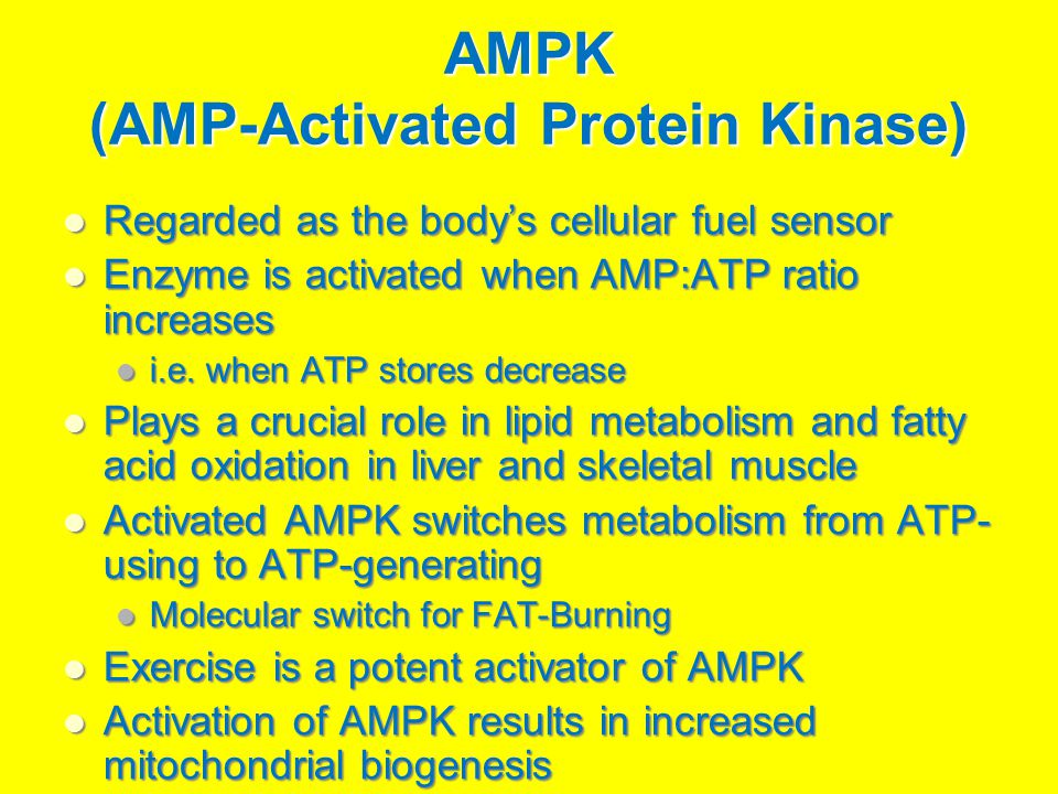 AMPK (AMP-Activated Protein Kinase) Regarded as the body's cellular fuel sensor Regarded as the body's cellular fuel sensor Enzyme is activated when AMP:ATP ratio increases Enzyme is activated when AMP:ATP ratio increases i.e.