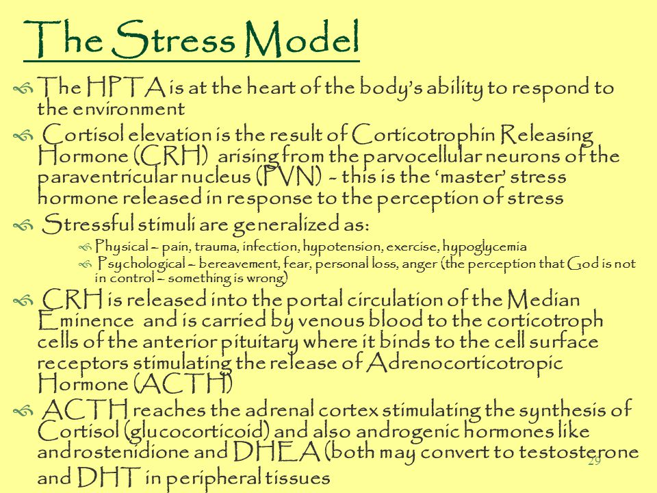 29 The Stress Model  The HPTA is at the heart of the body's ability to respond to the environment  Cortisol elevation is the result of Corticotrophin Releasing Hormone (CRH) arising from the parvocellular neurons of the paraventricular nucleus (PVN) - this is the 'master' stress hormone released in response to the perception of stress  Stressful stimuli are generalized as:  Physical – pain, trauma, infection, hypotension, exercise, hypoglycemia  Psychological – bereavement, fear, personal loss, anger (the perception that God is not in control – something is wrong)  CRH is released into the portal circulation of the Median Eminence and is carried by venous blood to the corticotroph cells of the anterior pituitary where it binds to the cell surface receptors stimulating the release of Adrenocorticotropic Hormone (ACTH)  ACTH reaches the adrenal cortex stimulating the synthesis of Cortisol (glucocorticoid) and also androgenic hormones like androstenidione and DHEA (both may convert to testosterone and DHT in peripheral tissues