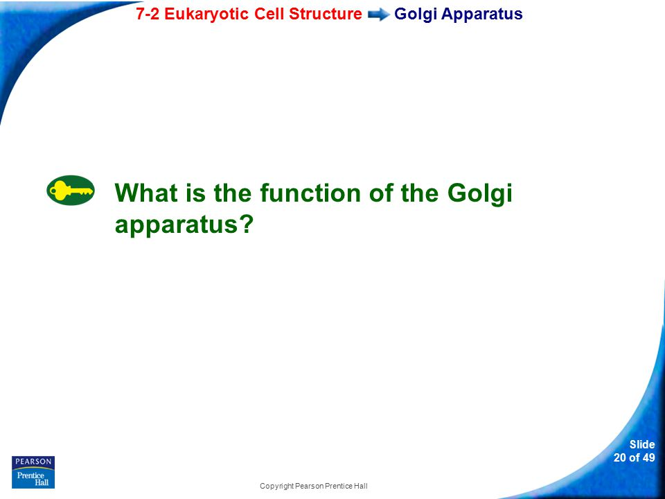 7-2 Eukaryotic Cell Structure Slide 20 of 49 Copyright Pearson Prentice Hall Golgi Apparatus What is the function of the Golgi apparatus?