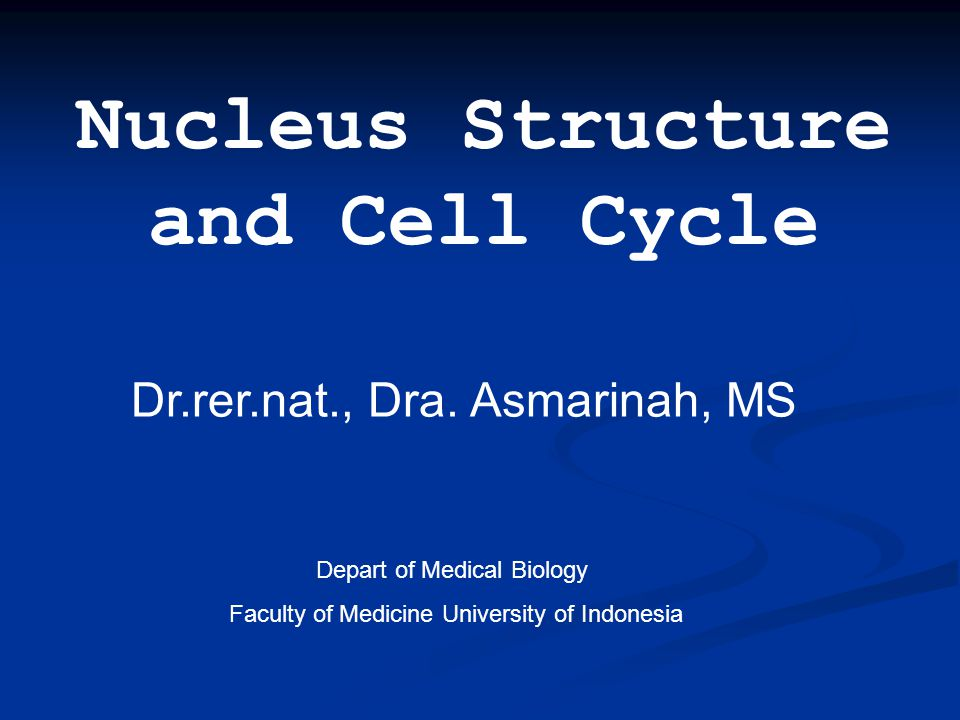 Nucleus Structure and Cell Cycle Dr.rer.nat., Dra. Asmarinah, MS Depart of Medical Biology Faculty of Medicine University of Indonesia