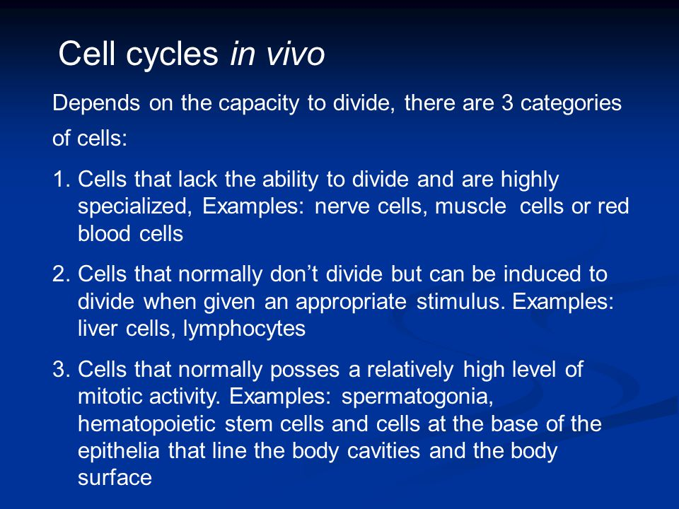 Cell cycles in vivo Depends on the capacity to divide, there are 3 categories of cells: 1.Cells that lack the ability to divide and are highly special