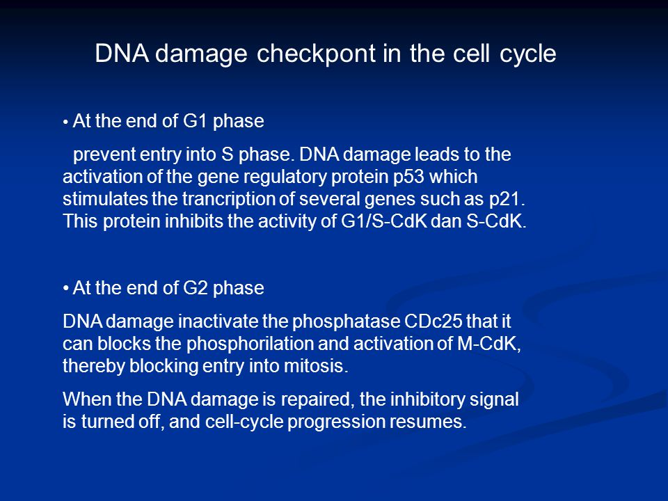 DNA damage checkpont in the cell cycle At the end of G1 phase prevent entry into S phase. DNA damage leads to the activation of the gene regulatory pr
