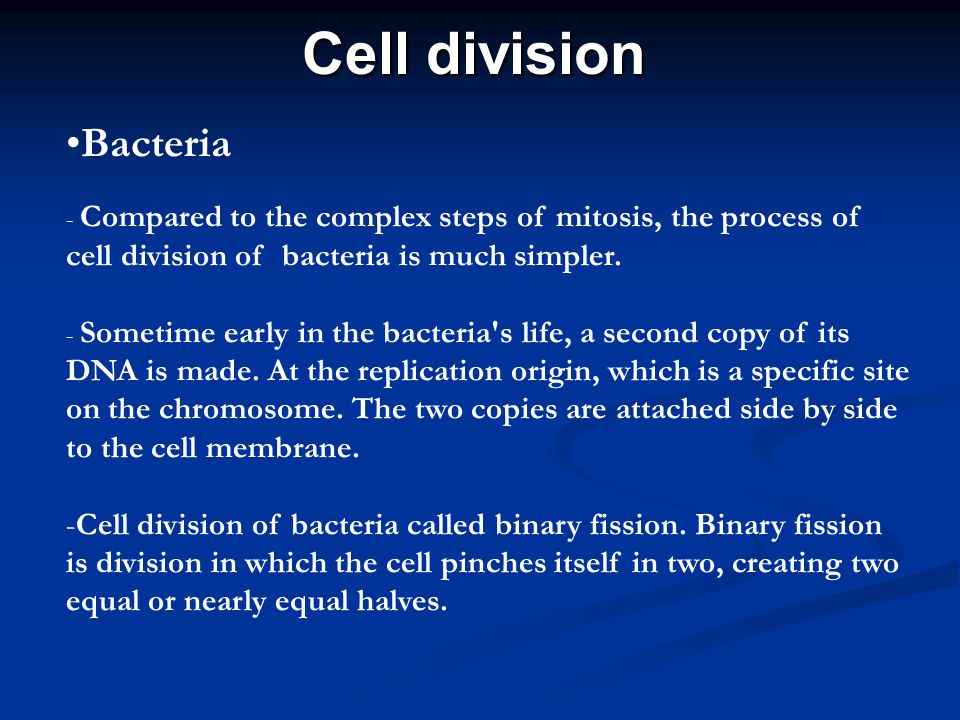 Cell division Bacteria - Compared to the complex steps of mitosis, the process of cell division of bacteria is much simpler. - Sometime early in the b