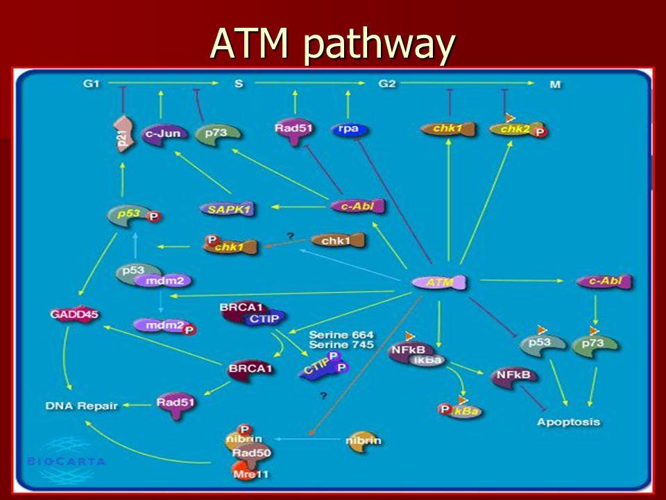 ATM pathway
