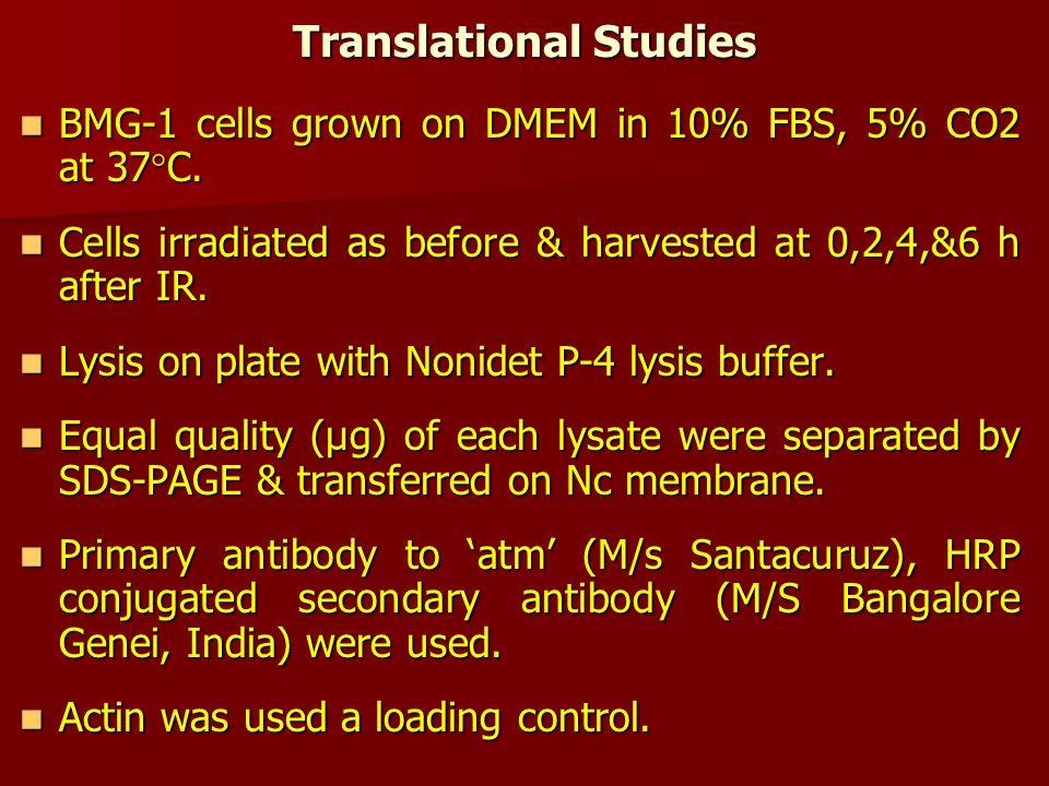 Translational Studies BMG-1 cells grown on DMEM in 10% FBS, 5% CO2 at 37  C.