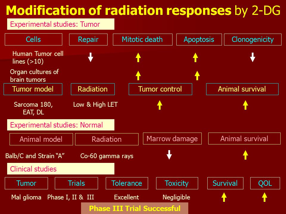 Modification of radiation responses by 2-DG Cells Human Tumor cell lines (>10) RepairMitotic deathApoptosisClonogenicity Tumor modelRadiationTumor controlAnimal survival Sarcoma 180, EAT, DL Low & High LET Animal modelRadiation Marrow damageAnimal survival Balb/C and Strain A Co-60 gamma rays Experimental studies: Tumor Experimental studies: Normal Clinical studies TumorToleranceToxicitySurvivalQOLTrials Mal glioma Phase I, II & IIIExcellentNegligible Organ cultures of brain tumors -- Phase III Trial Successful