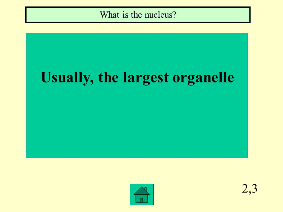 2,3 What is the nucleus? Usually, the largest organelle